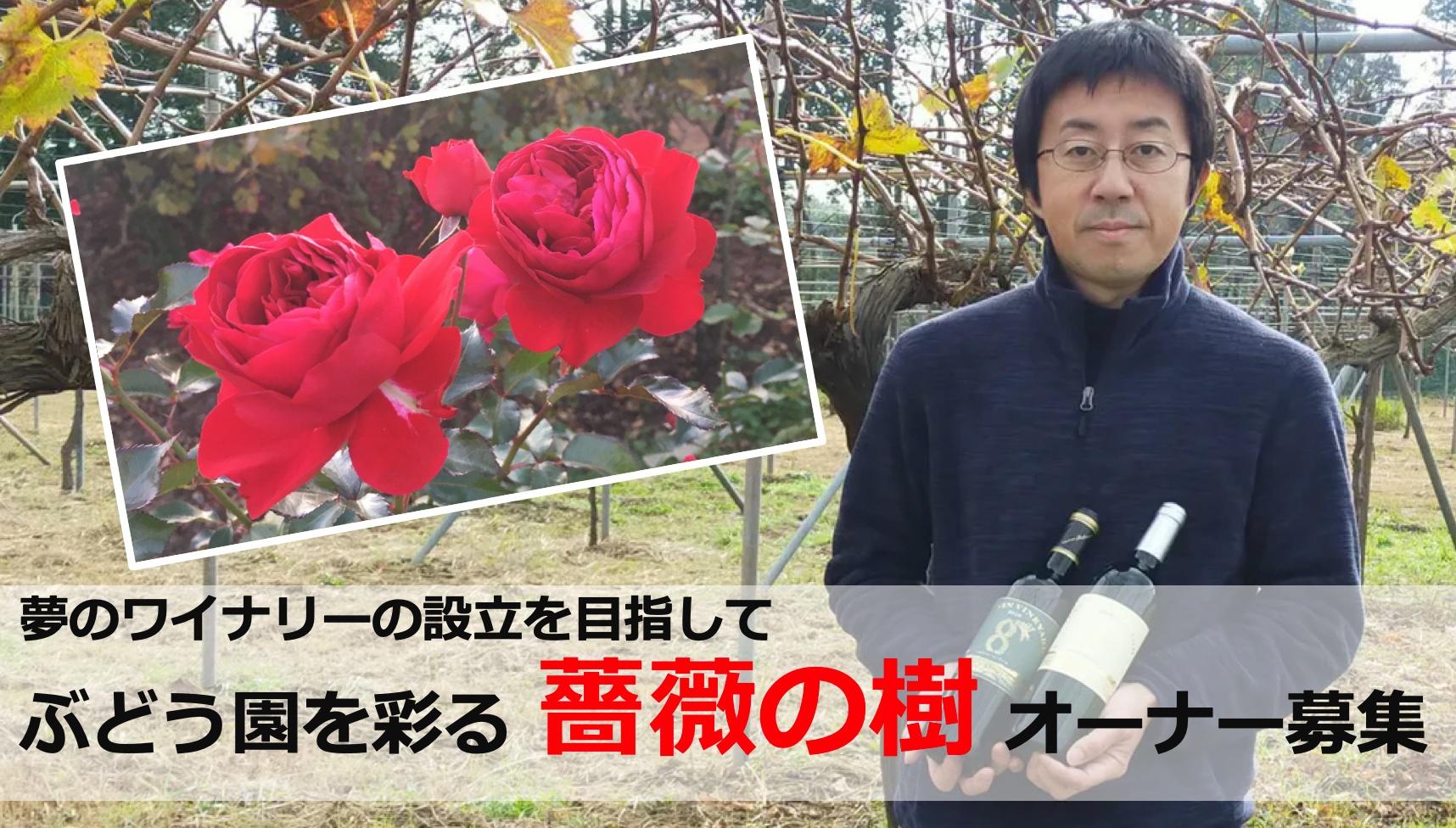 「ぶどう園を彩る 薔薇の樹オーナー募集」プロジェクト🌹