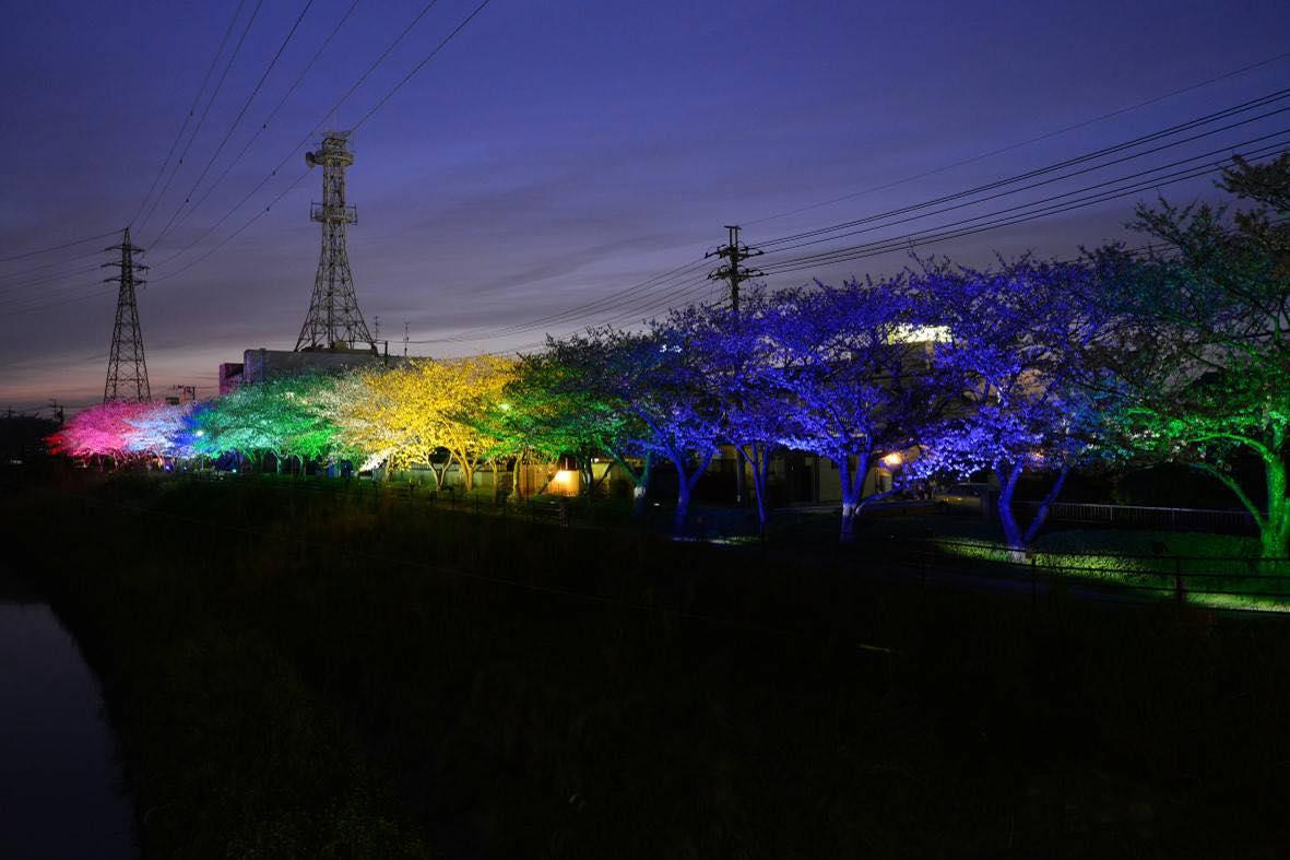 7色ライトアップの桜